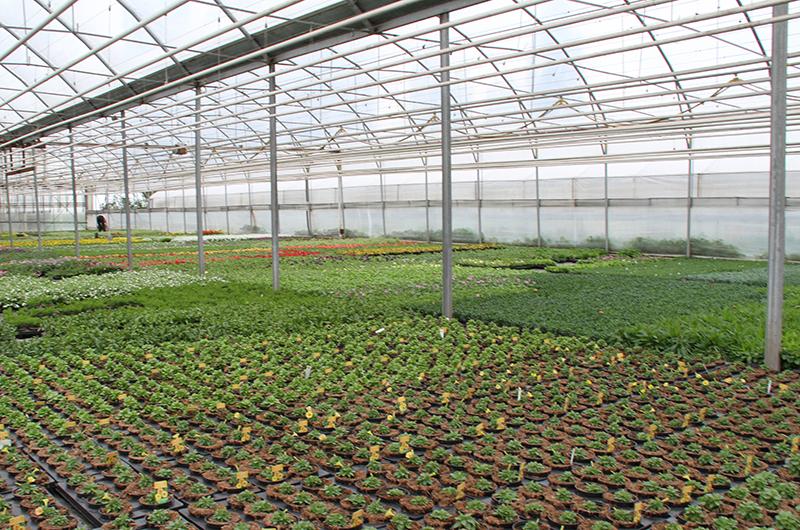 Glashaus mit dem Pflanzen
