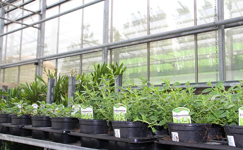 jungpflanzen in Glashaus